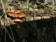 stump_fungi.jpg